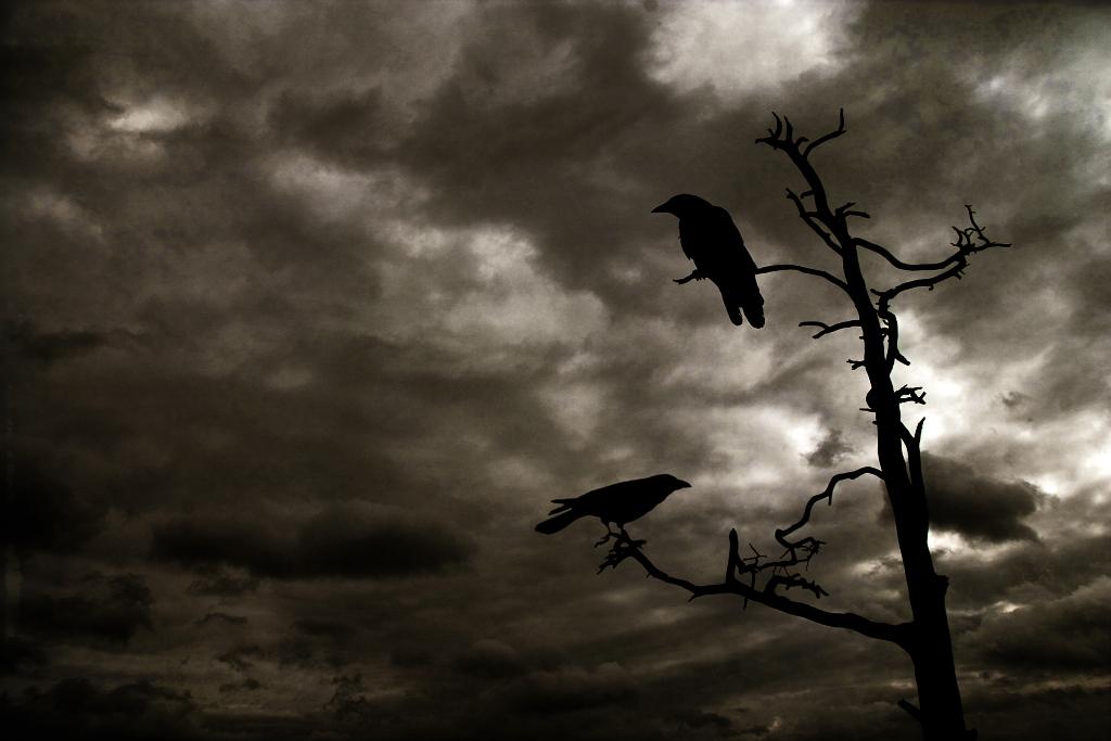 Odin_Ravens_by_grassel