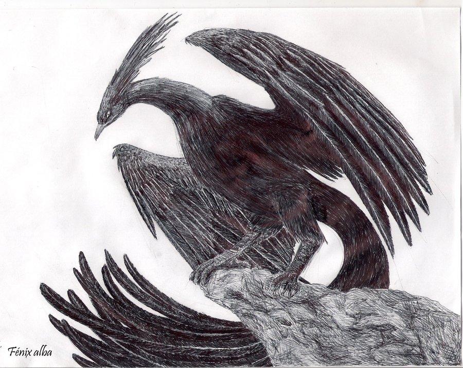 fenix_negro___ierne_by_almaoscurecida-d5dffxm